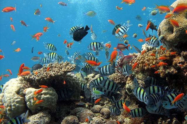 mořské rybky